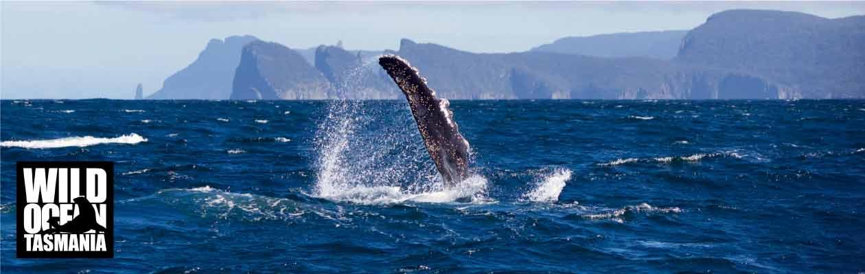 Wild Ocean Tasmania