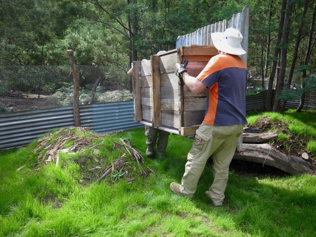 Carrying the newly built shelter into the enclosure