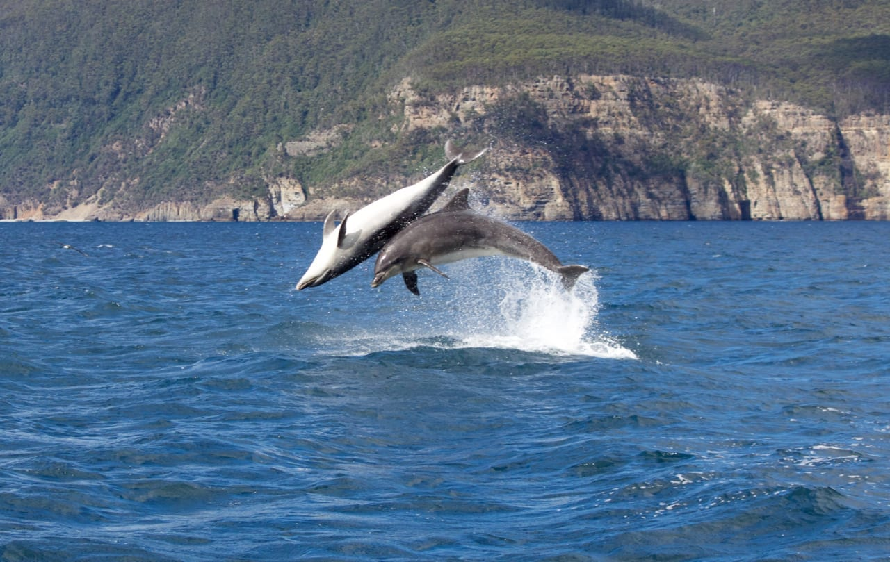 Dolphins performing incredible jumps.