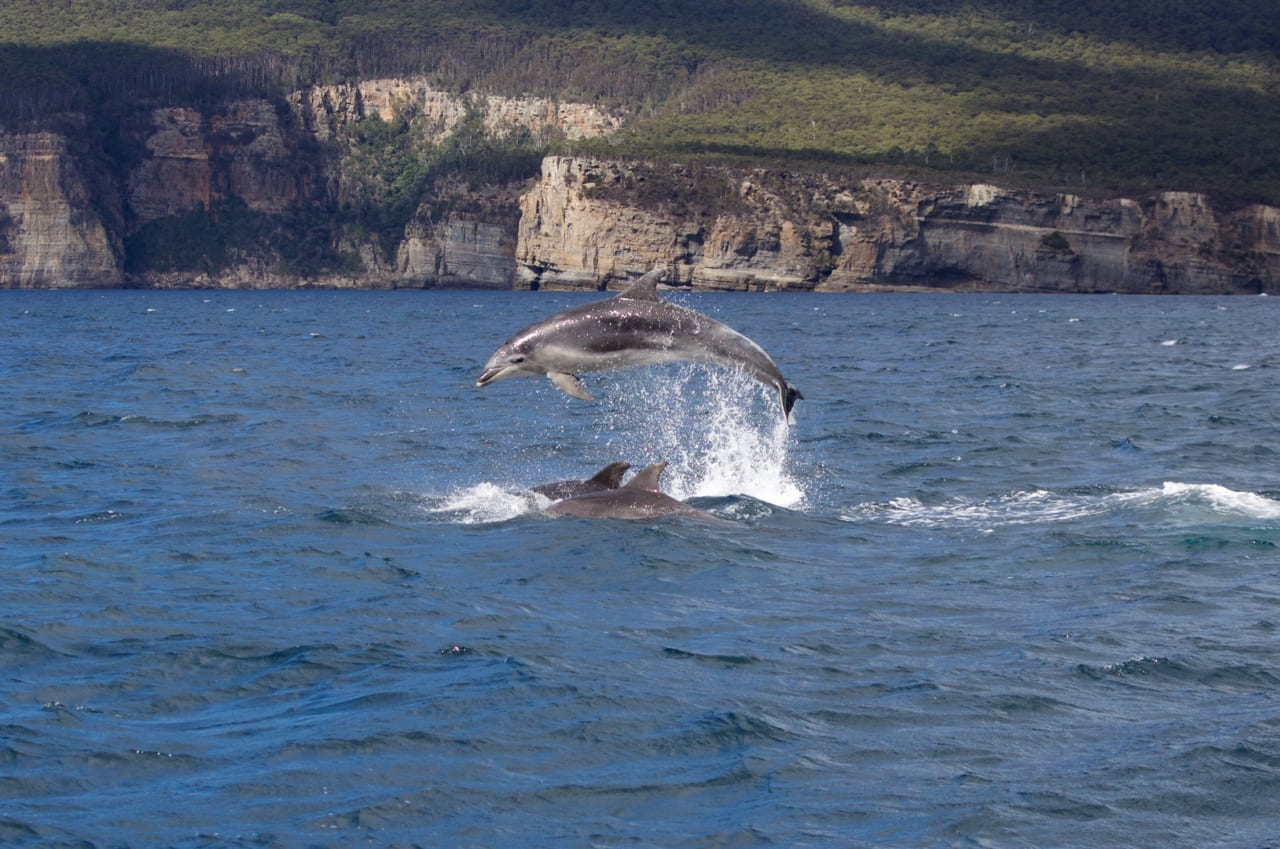 Amazing dolphin displays in the wild