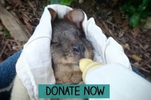 Donate to orphaned wildlife
