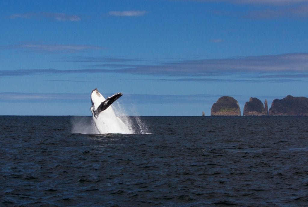 Whale watching tour in Tasmania