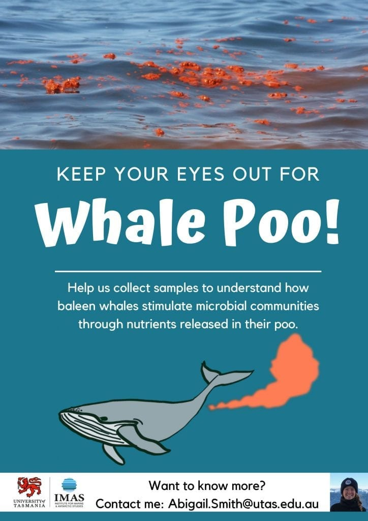 Whale poo research poster