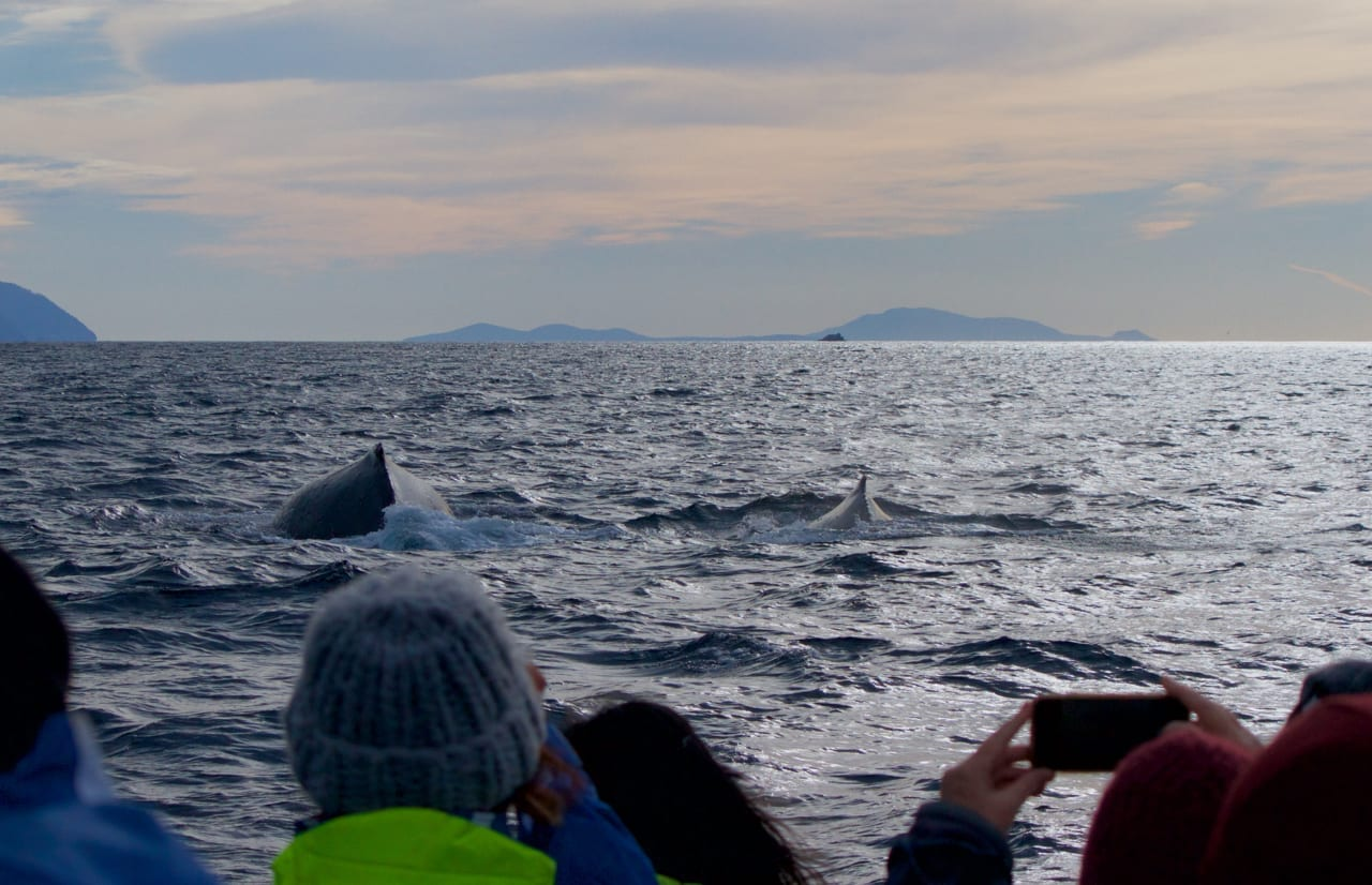 Watching the whales in the evening light.