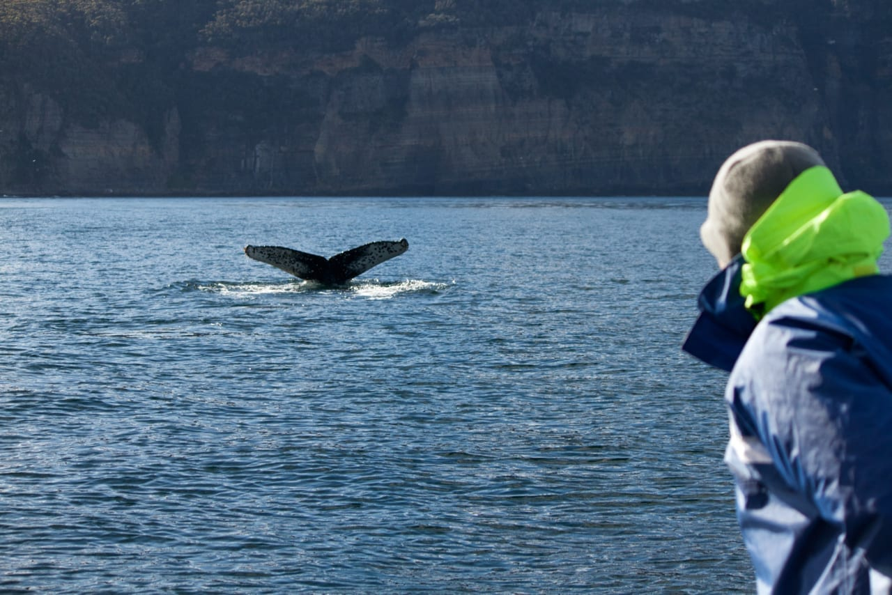 Photographing whales in Tasmania