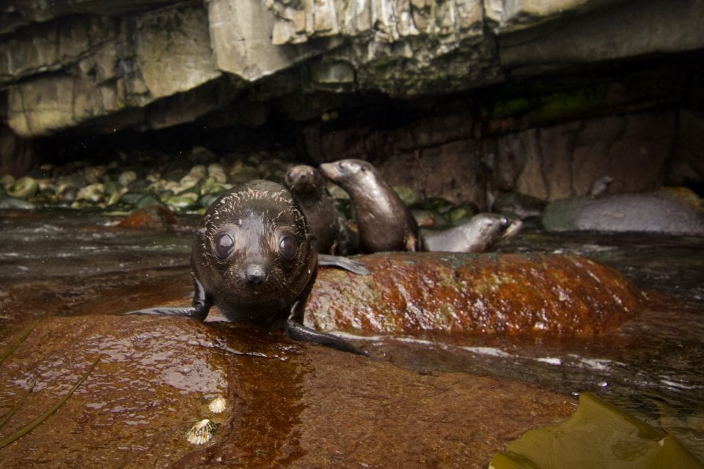 Young seal pups having their first swims in the rock pools.