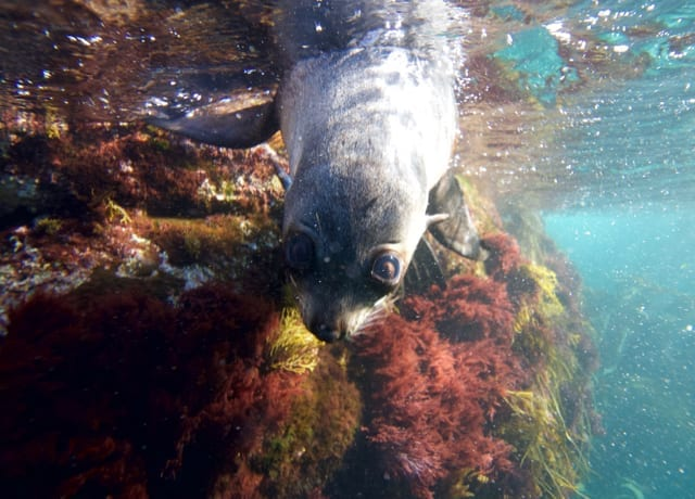 Snorkelling amongst seals and other fascinating marine life.