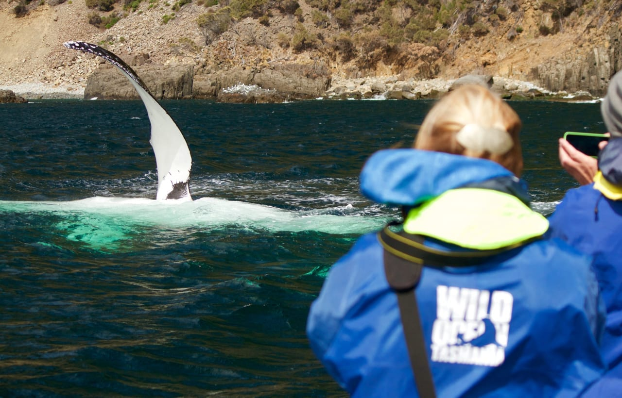 Close whale encounters on our scenic tour.