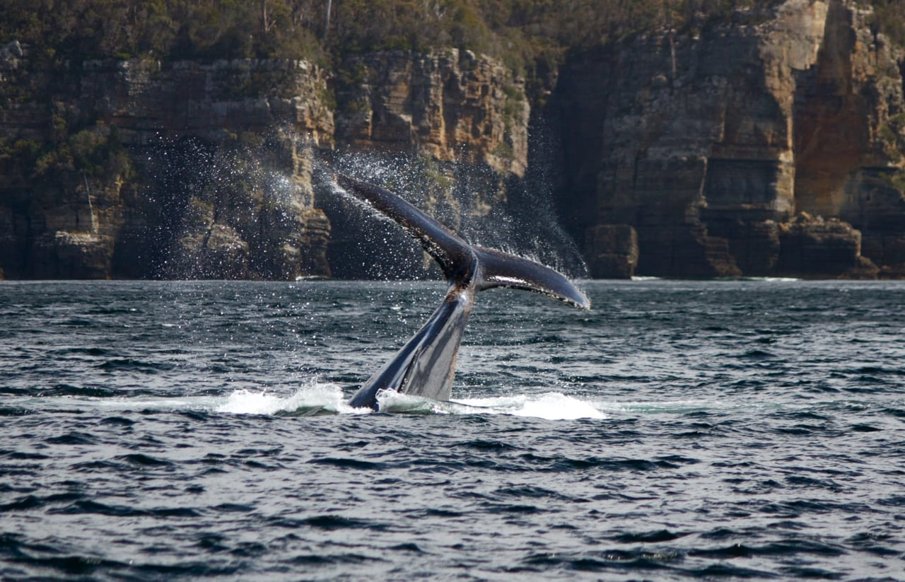 Whale's tail and high sea cliffs