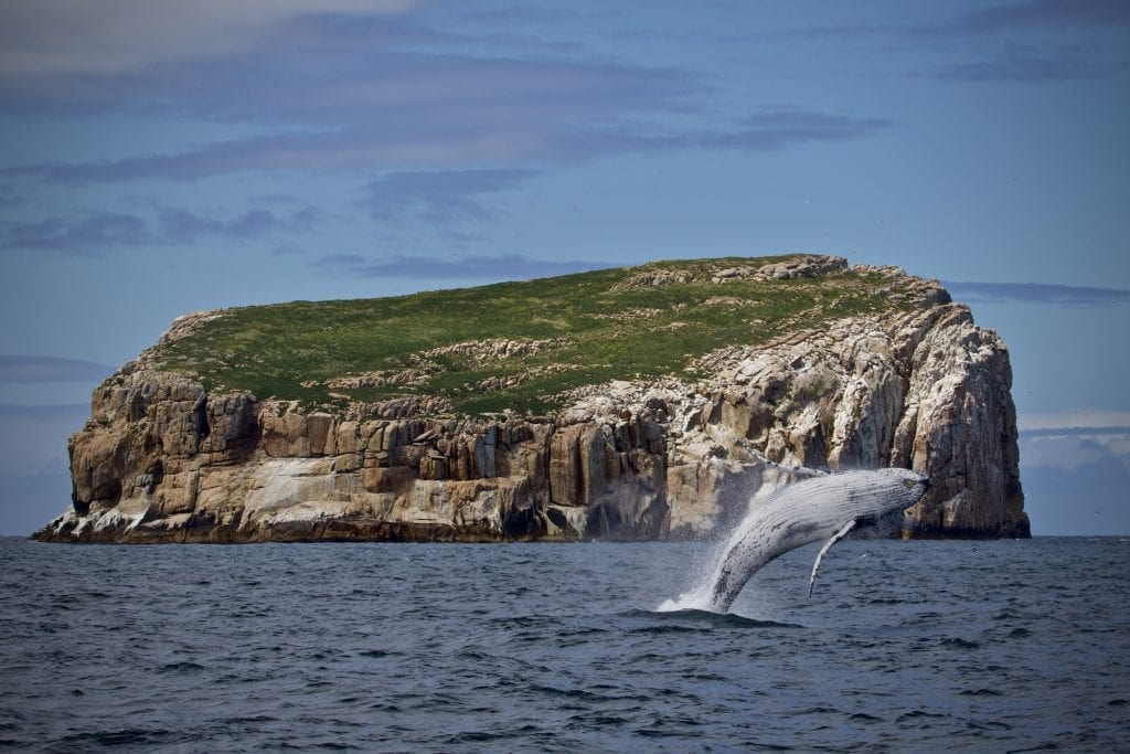 Whale watching at home in Tasmania.
